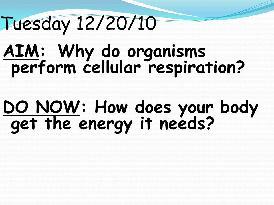 Tuesday 12/20/10 AIM: Why do organisms perform cellular respiration.