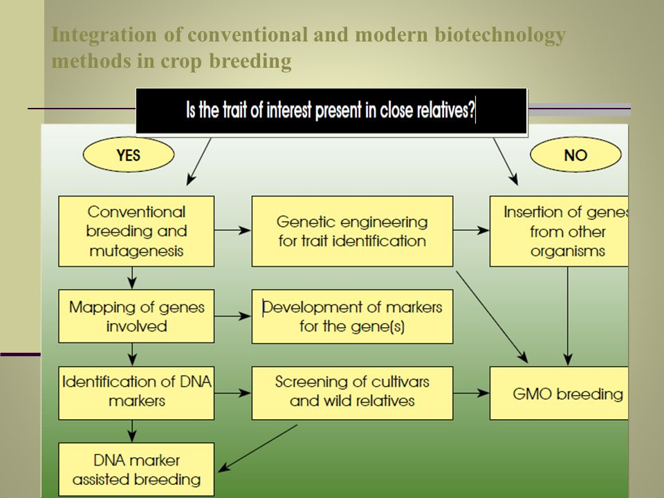 Integration of conventional and modern biotechnology