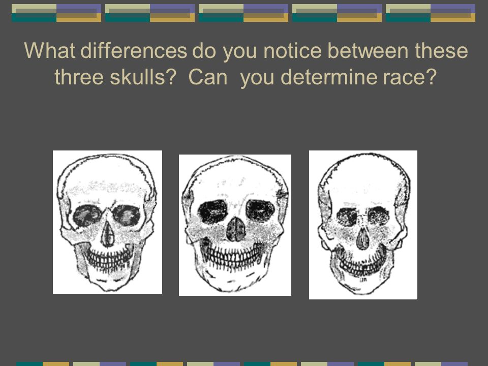 What differences do you notice between these three skulls