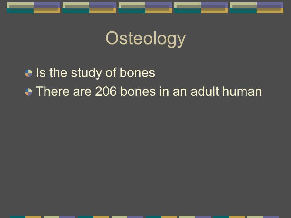 Osteology Is the study of bones There are 206 bones in an adult human