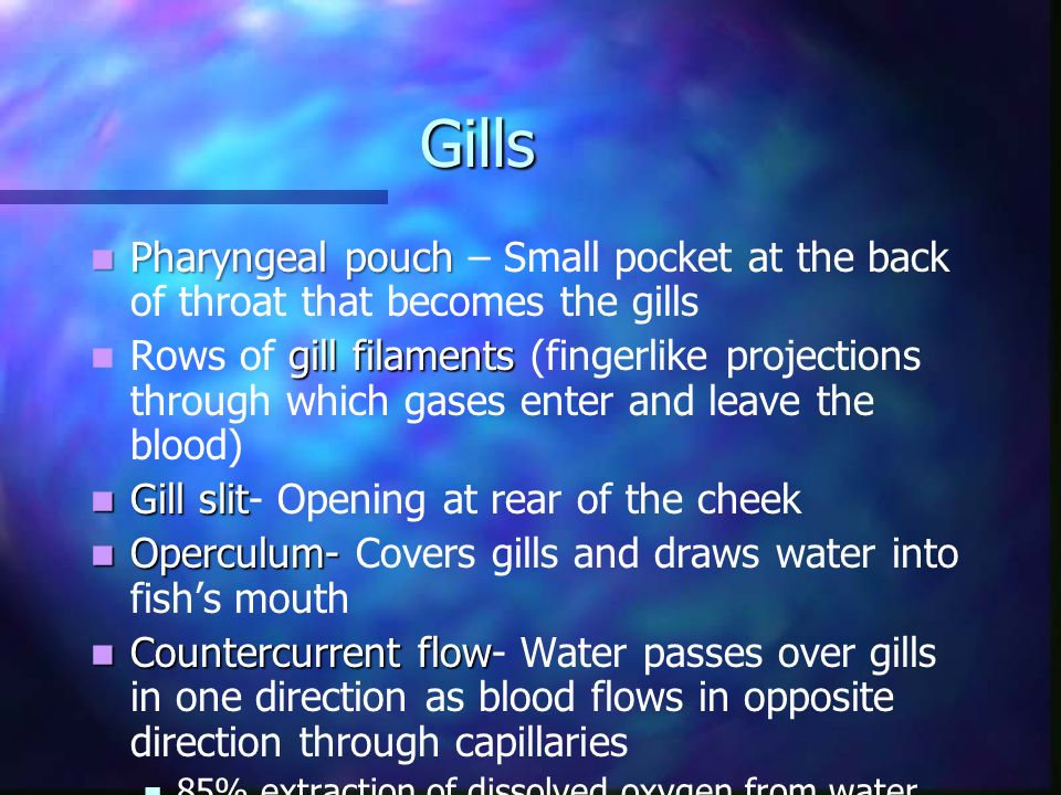 Gills Pharyngeal pouch – Small pocket at the back of throat that becomes the gills.