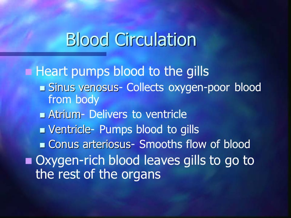 Blood Circulation Heart pumps blood to the gills