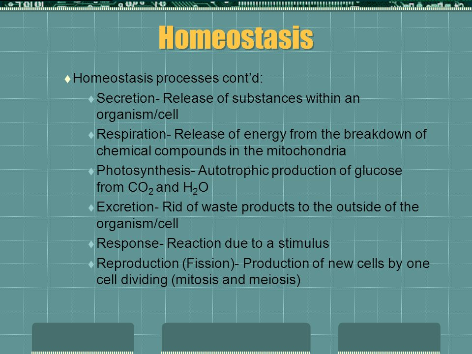 Homeostasis Homeostasis processes cont'd:
