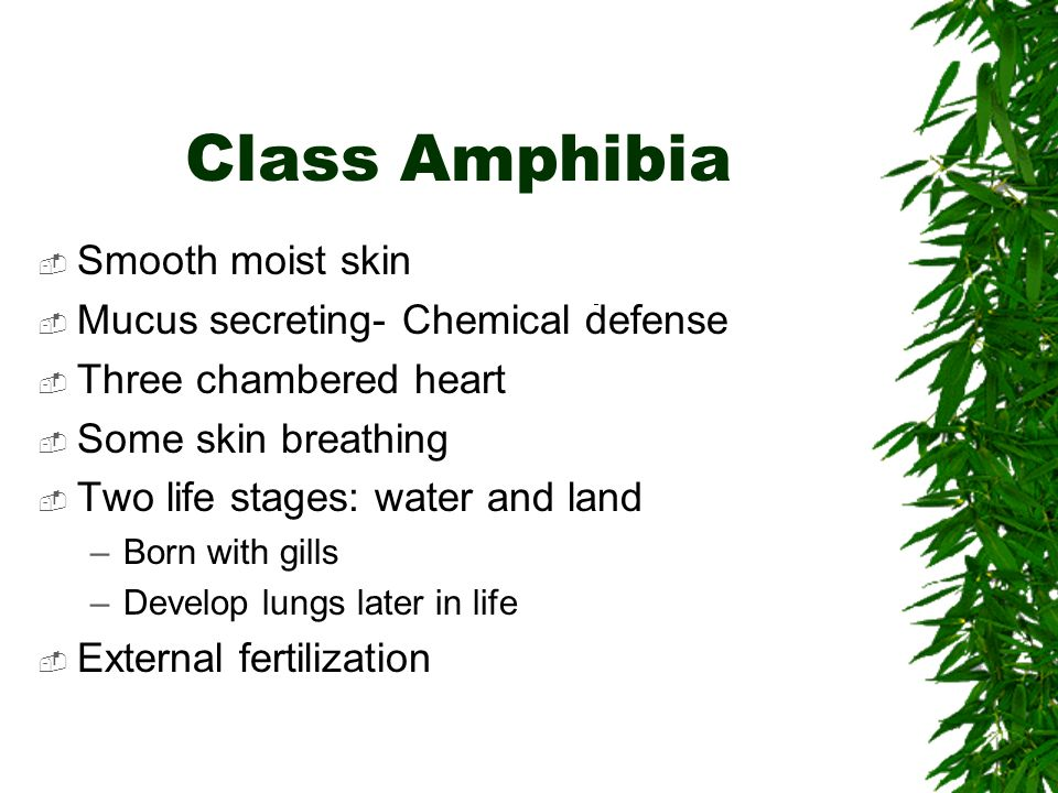 Class Amphibia Smooth moist skin Mucus secreting- Chemical defense