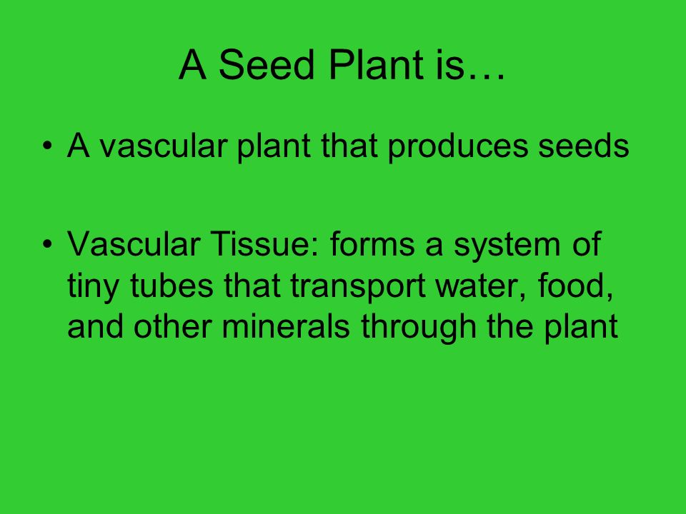 A Seed Plant is… A vascular plant that produces seeds
