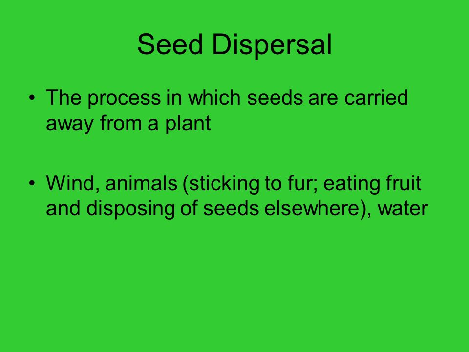 Seed Dispersal The process in which seeds are carried away from a plant.