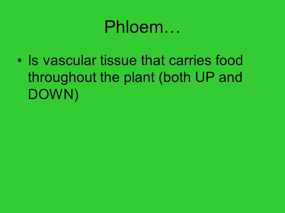 Phloem… Is vascular tissue that carries food throughout the plant (both UP and DOWN)