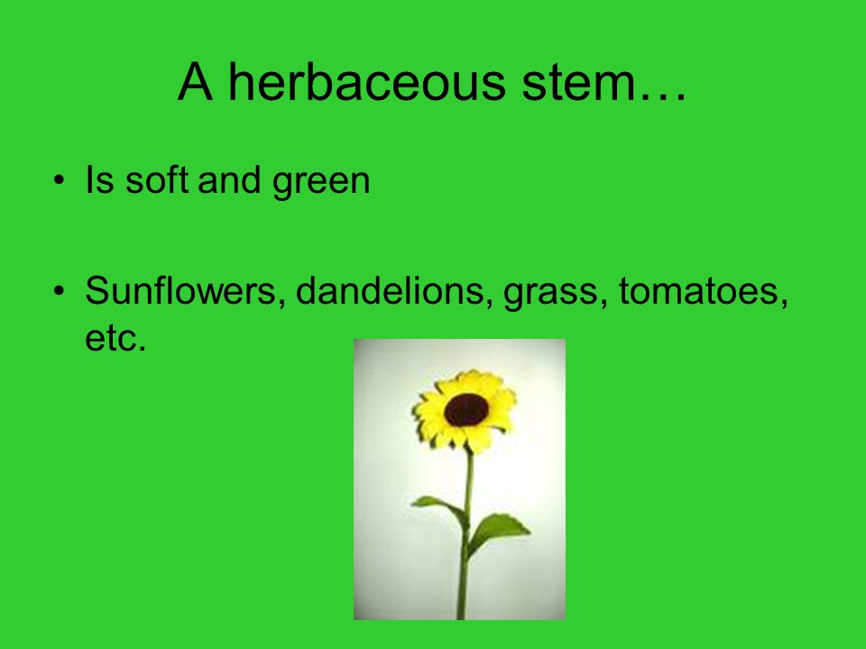 A herbaceous stem… Is soft and green