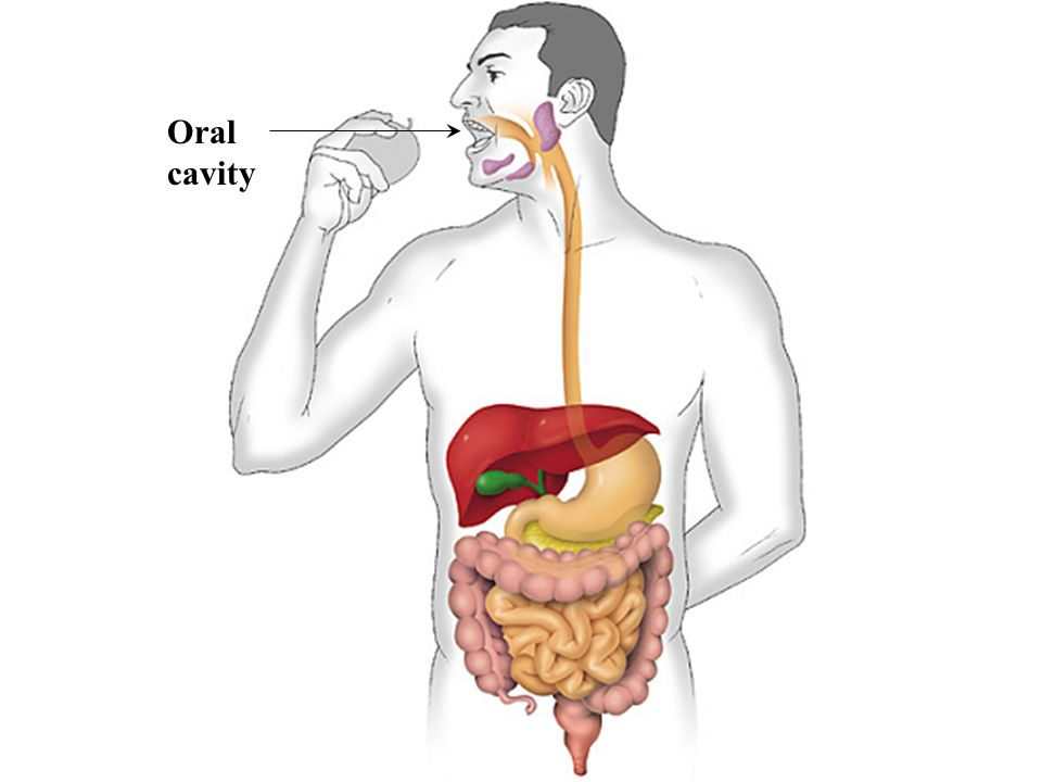 what does the pharynx do in the digestive system