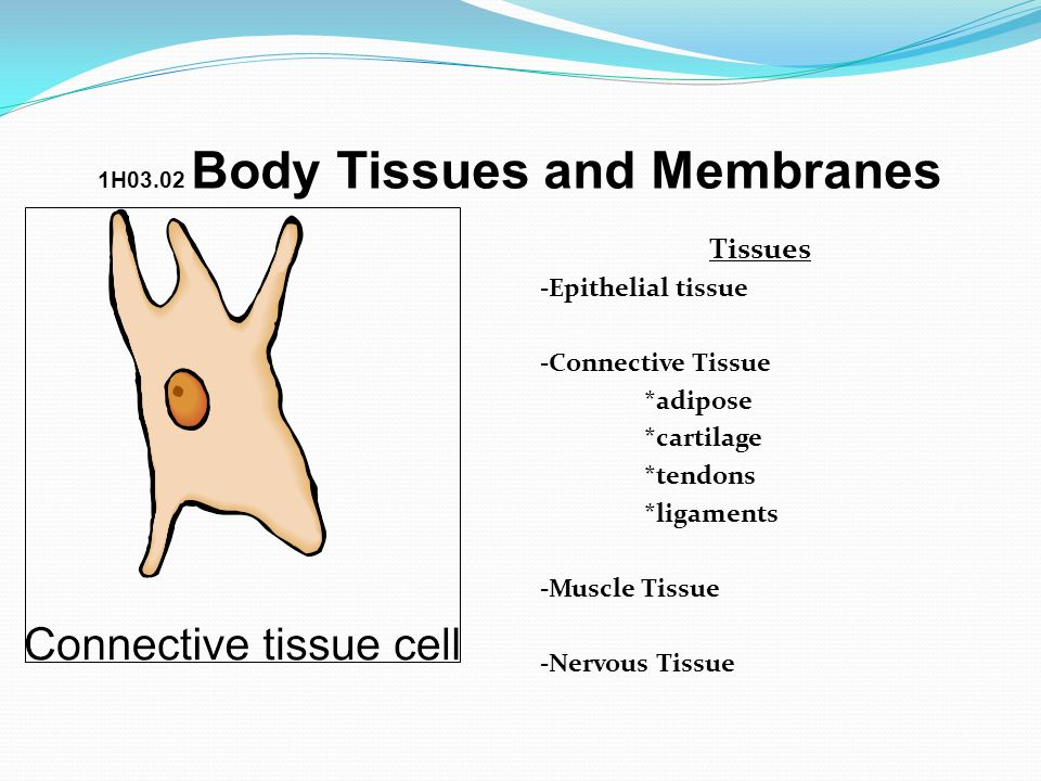 1H03.02 Body Tissues and Membranes