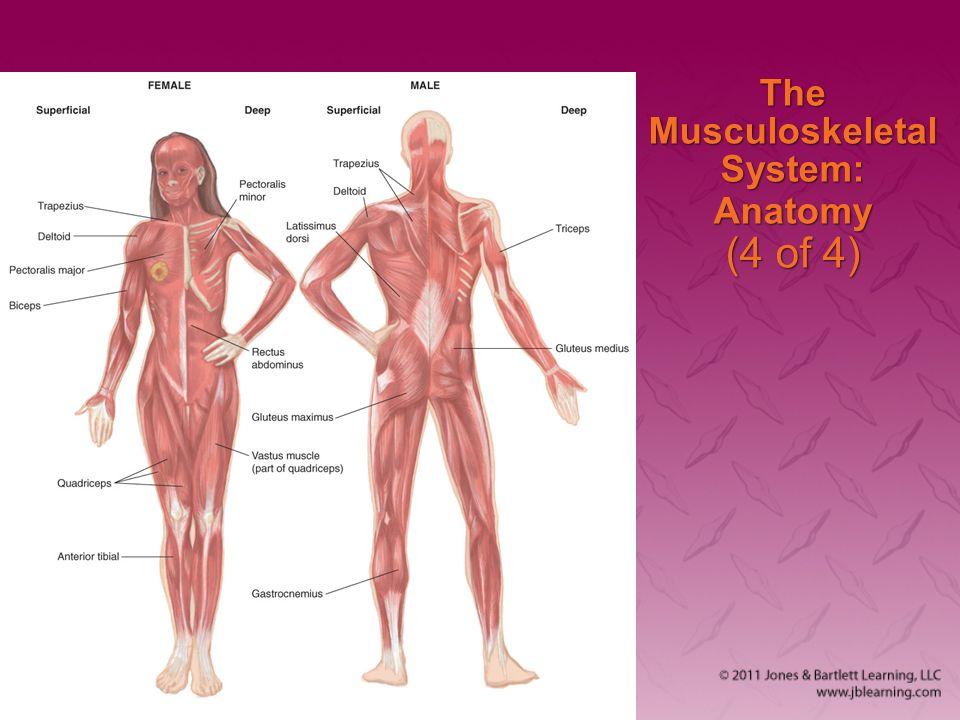 Chapter 5 The Human Body. - ppt download