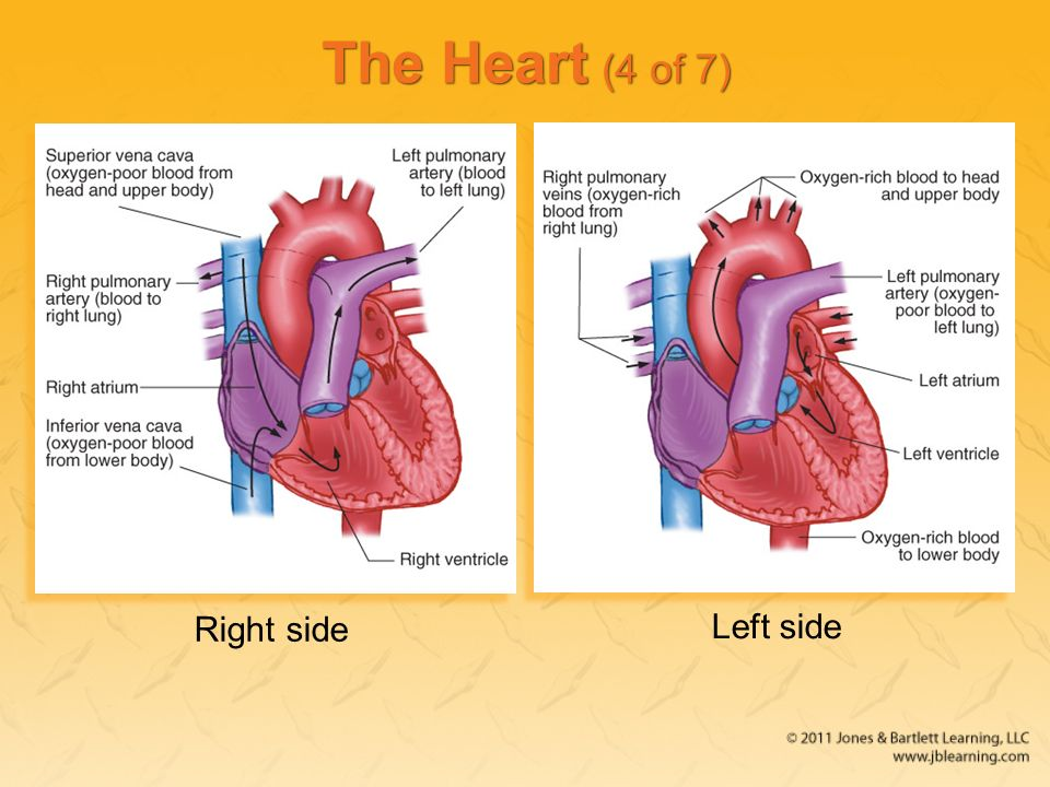 Chapter 5 The Human Body Ppt Download
