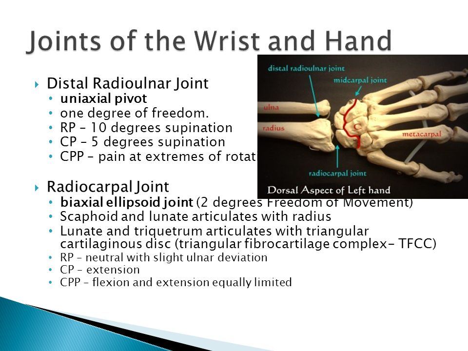 Enchanting Supination Of Hand Component - Human Anatomy Images ...