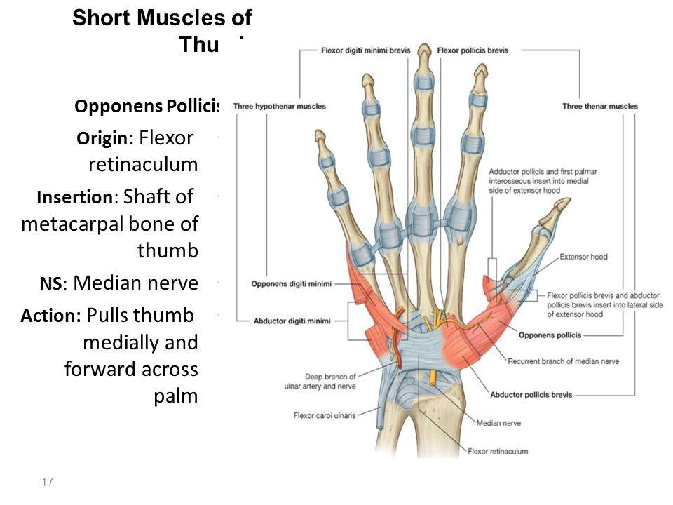 Thumb Ring Origin