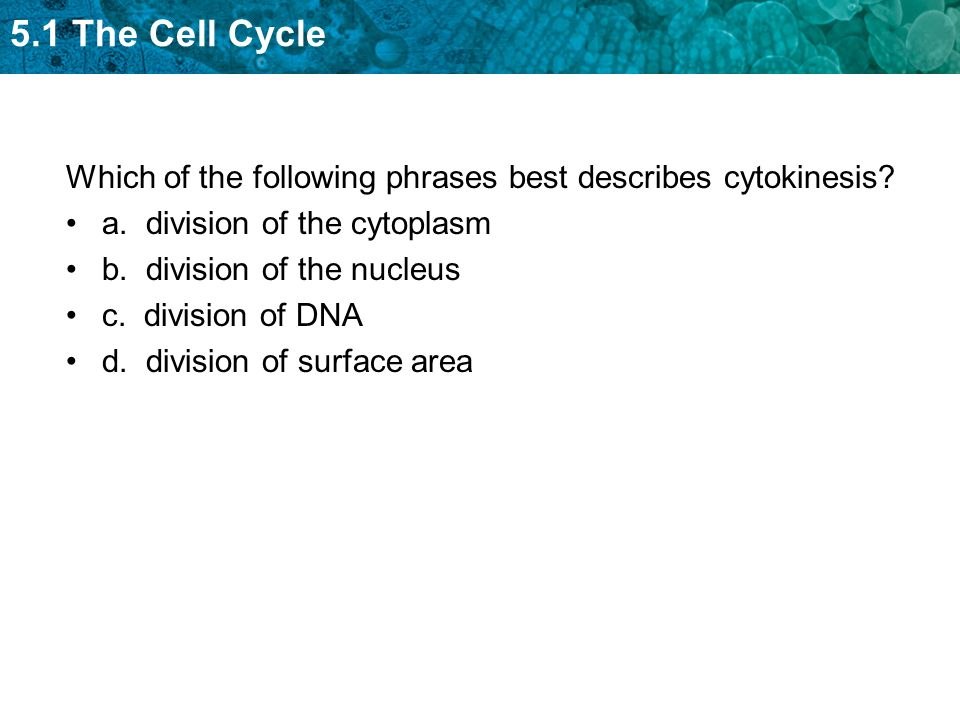 which phrase best describes the process of meiosis