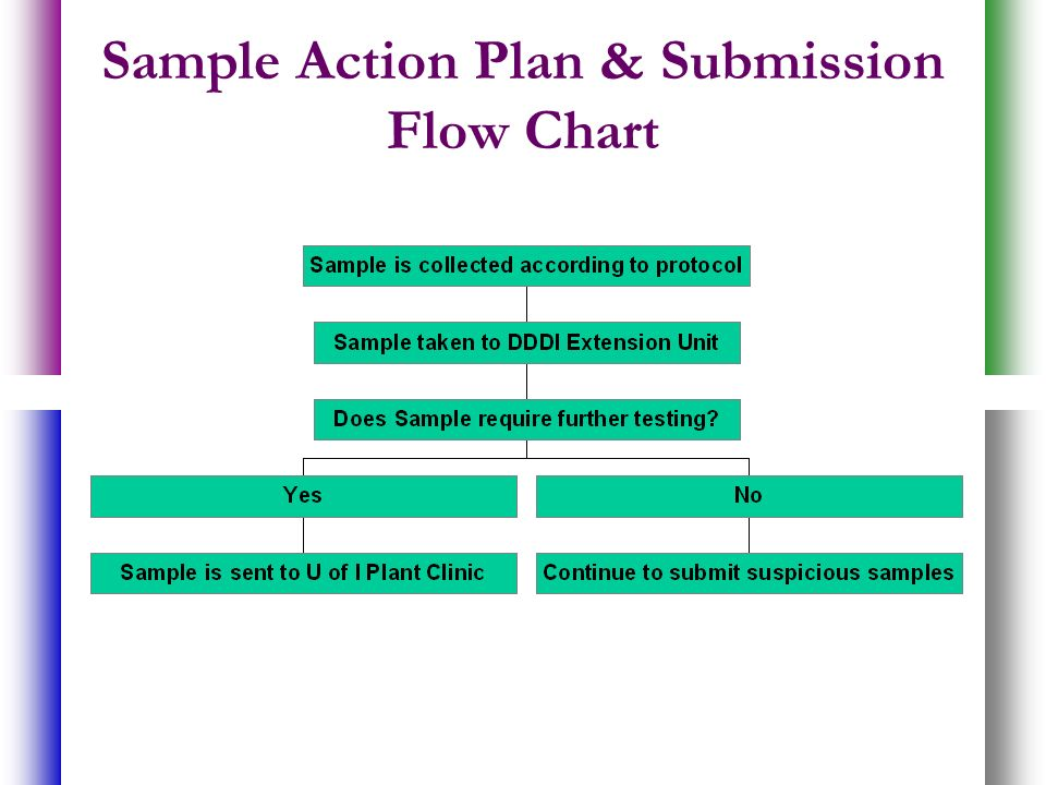 Sample Action Plan & Submission Flow Chart