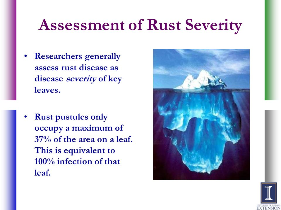 Assessment of Rust Severity