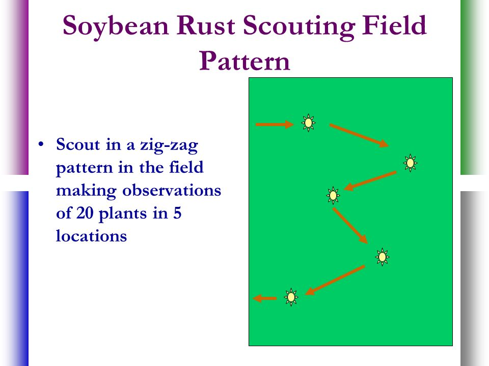 Soybean Rust Scouting Field Pattern