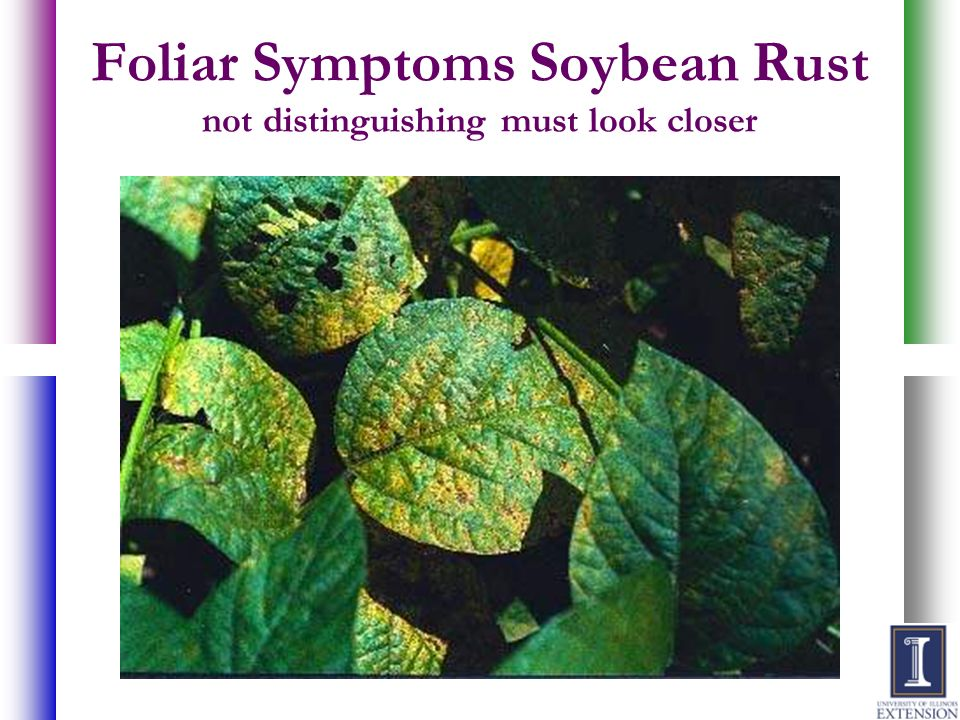 Foliar Symptoms Soybean Rust not distinguishing must look closer