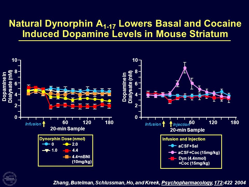 Natural Dynorphin A1-17 Lowers Basal and Cocaine Induced Dopamine Levels in Mouse Striatum