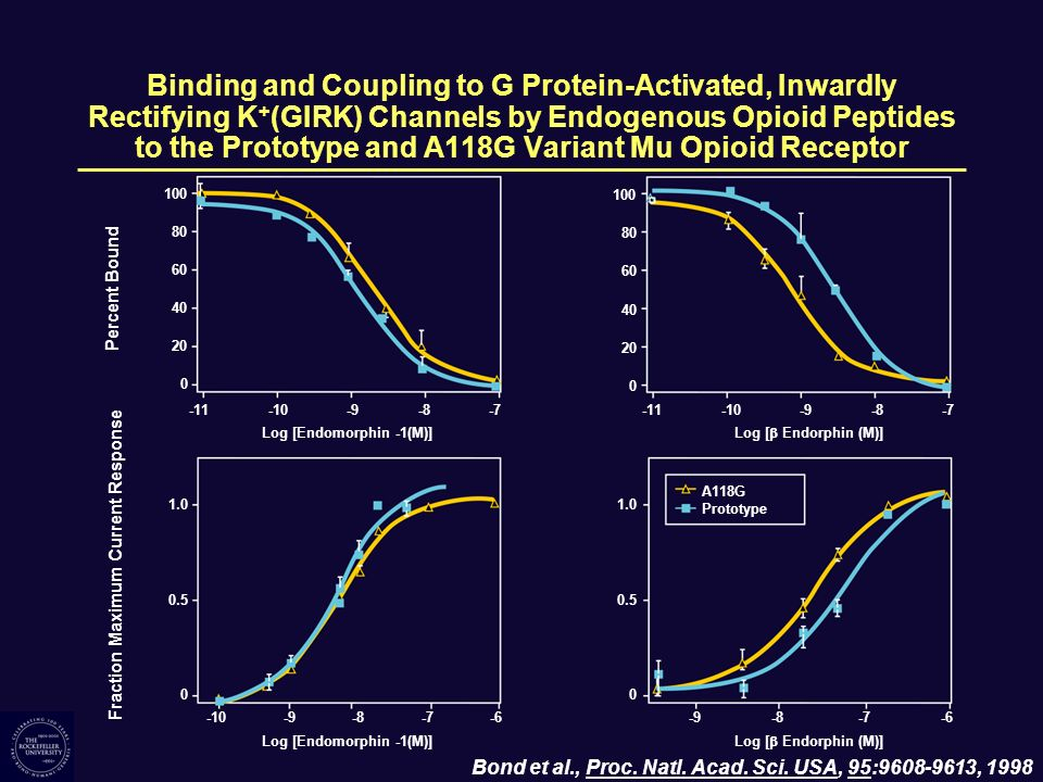 Binding and Coupling to G Protein-Activated, Inwardly Rectifying K+(GIRK) Channels by Endogenous Opioid Peptides to the Prototype and A118G Variant Mu Opioid Receptor