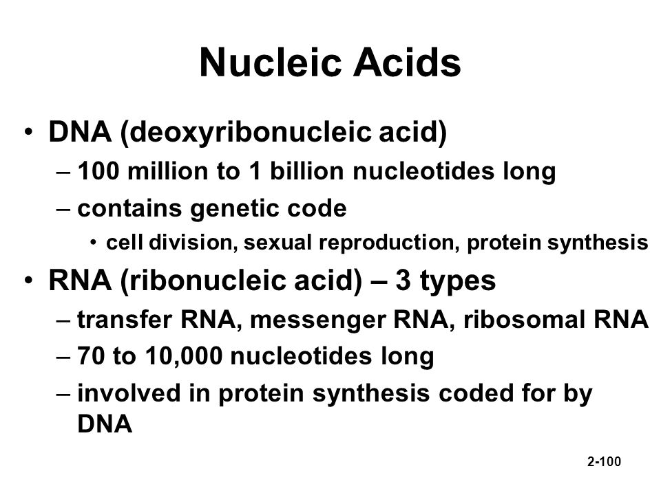 Nucleic Acids DNA (deoxyribonucleic acid)