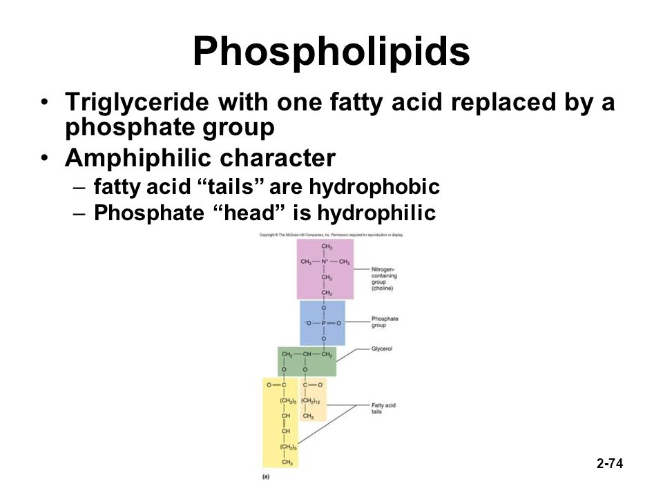 Phospholipids Triglyceride with one fatty acid replaced by a phosphate group. Amphiphilic character.