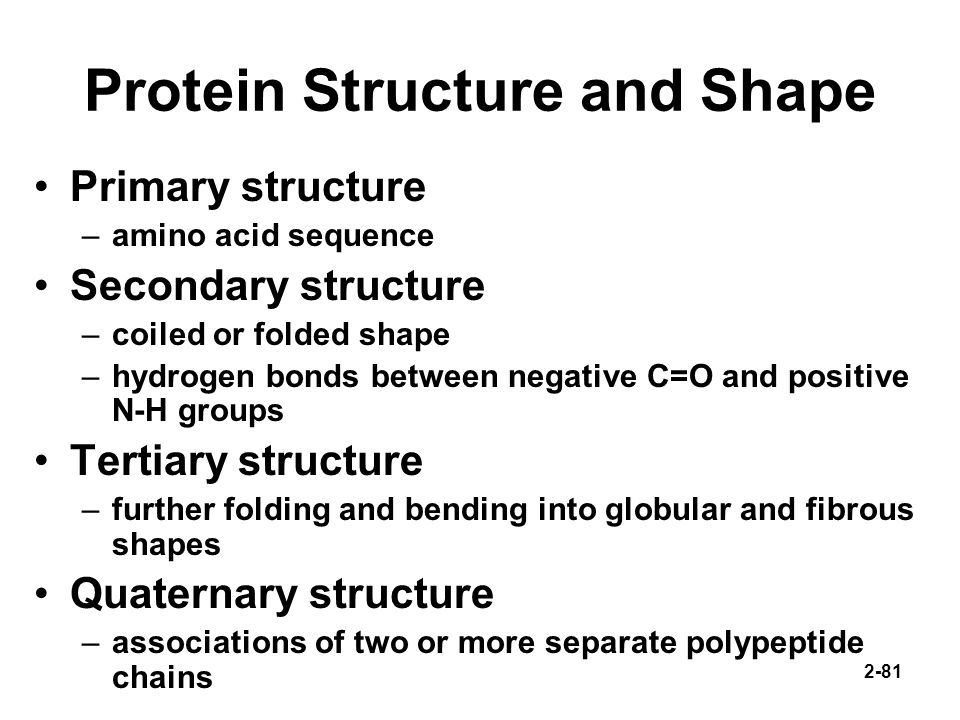 Protein Structure and Shape
