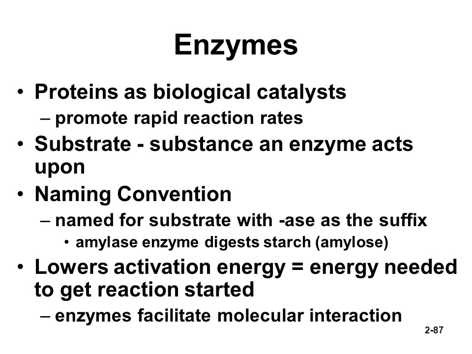Enzymes Proteins as biological catalysts