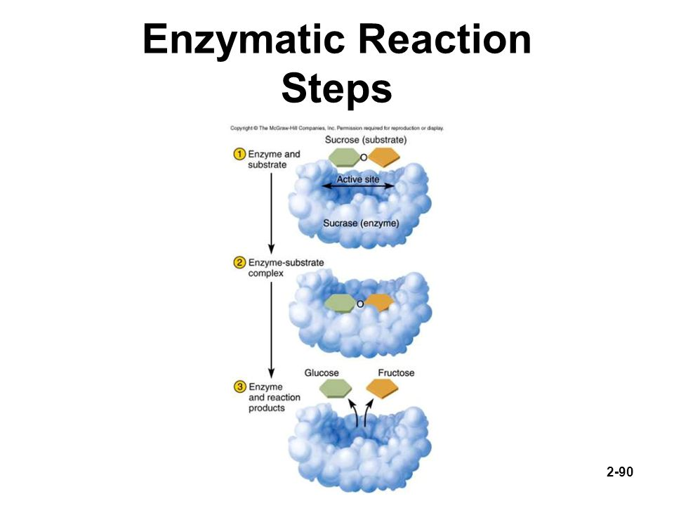Enzymatic Reaction Steps