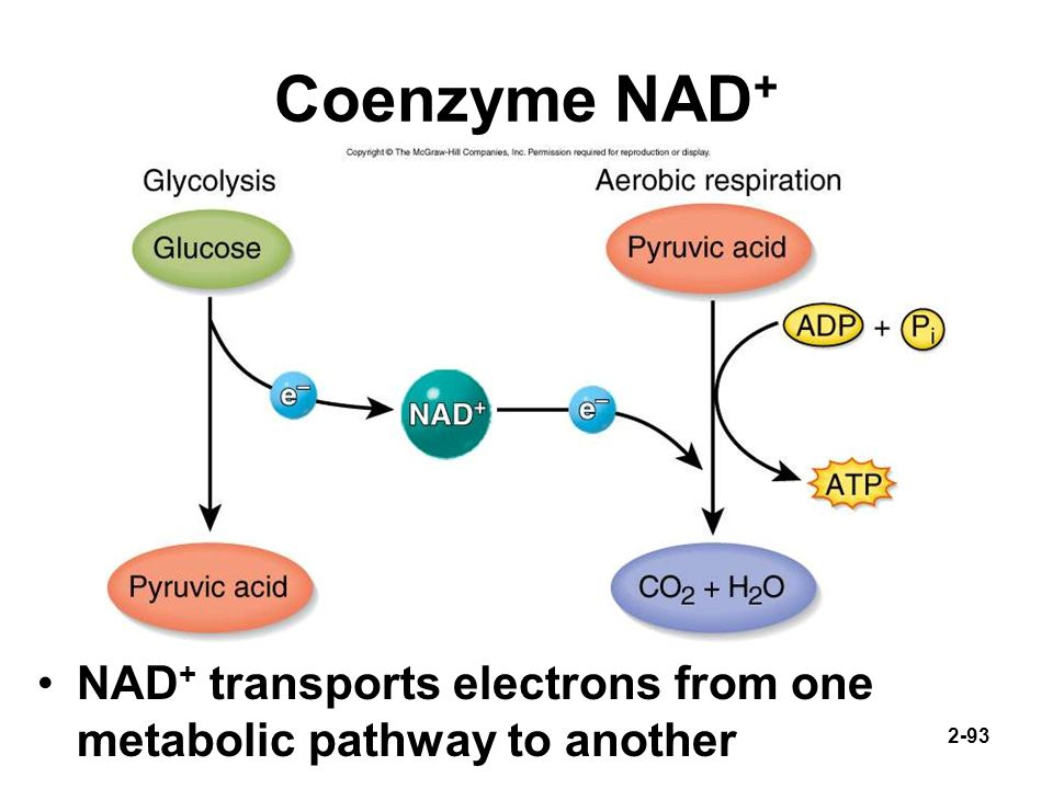 Coenzyme NAD+ NAD+ transports electrons from one metabolic pathway to another