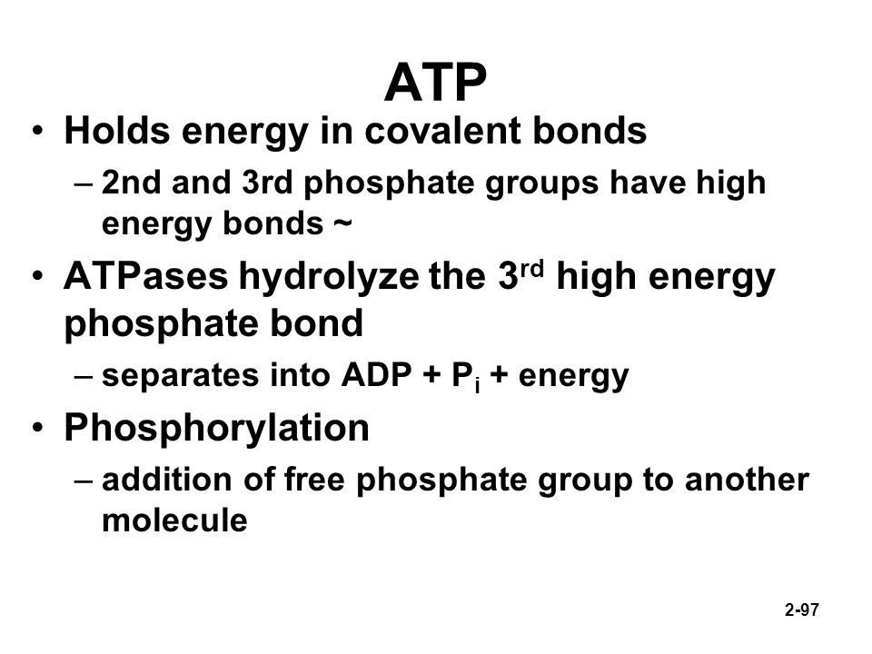 ATP Holds energy in covalent bonds