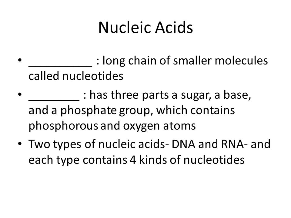 Nucleic Acids __________ : long chain of smaller molecules called nucleotides.