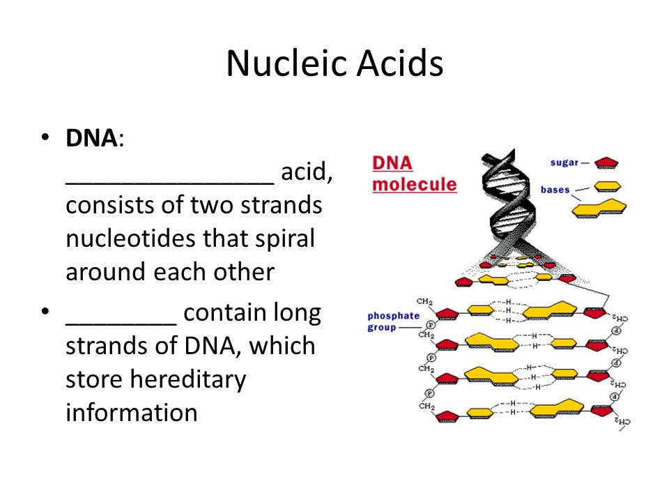 Nucleic Acids DNA: _______________ acid, consists of two strands nucleotides that spiral around each other.