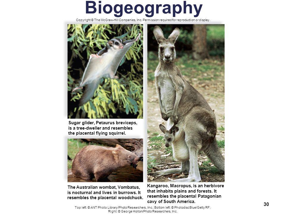 Biology Sylvia S  Mader Michael Windelspecht - ppt download