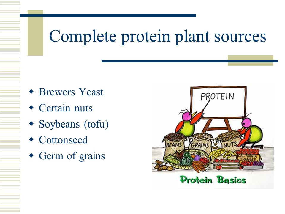 Complete protein plant sources