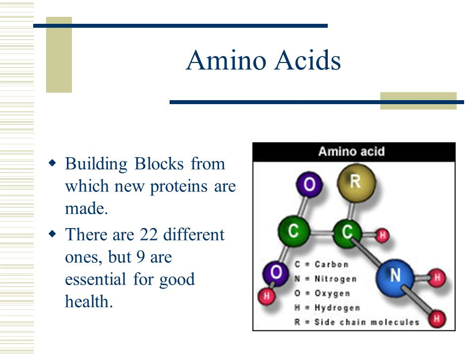 Amino Acids Building Blocks from which new proteins are made.