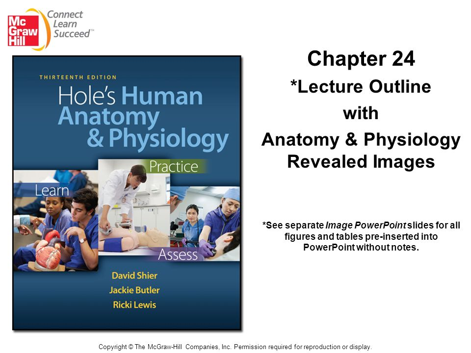 Chapter 24 *Lecture Outline with Anatomy & Physiology Revealed ...