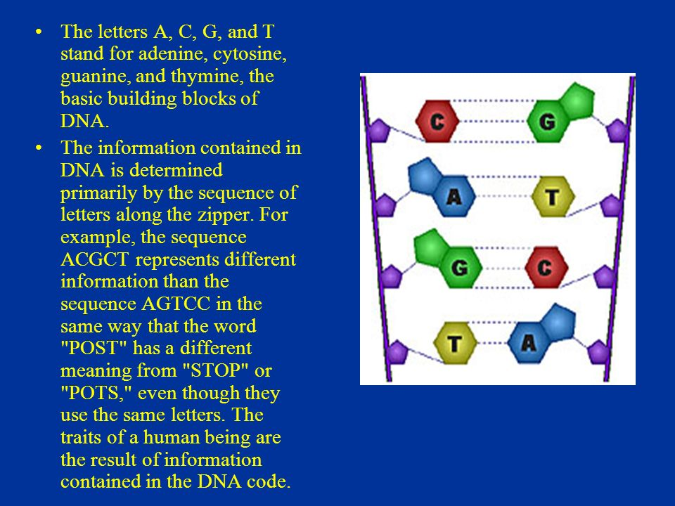 what do the letters dna stand for dna fingerprinting ppt 25510