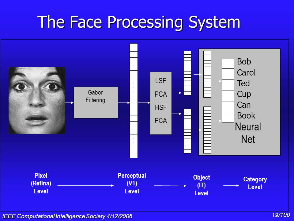 The Face Processing System