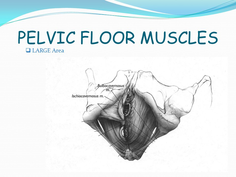 Your pelvic floor after birth