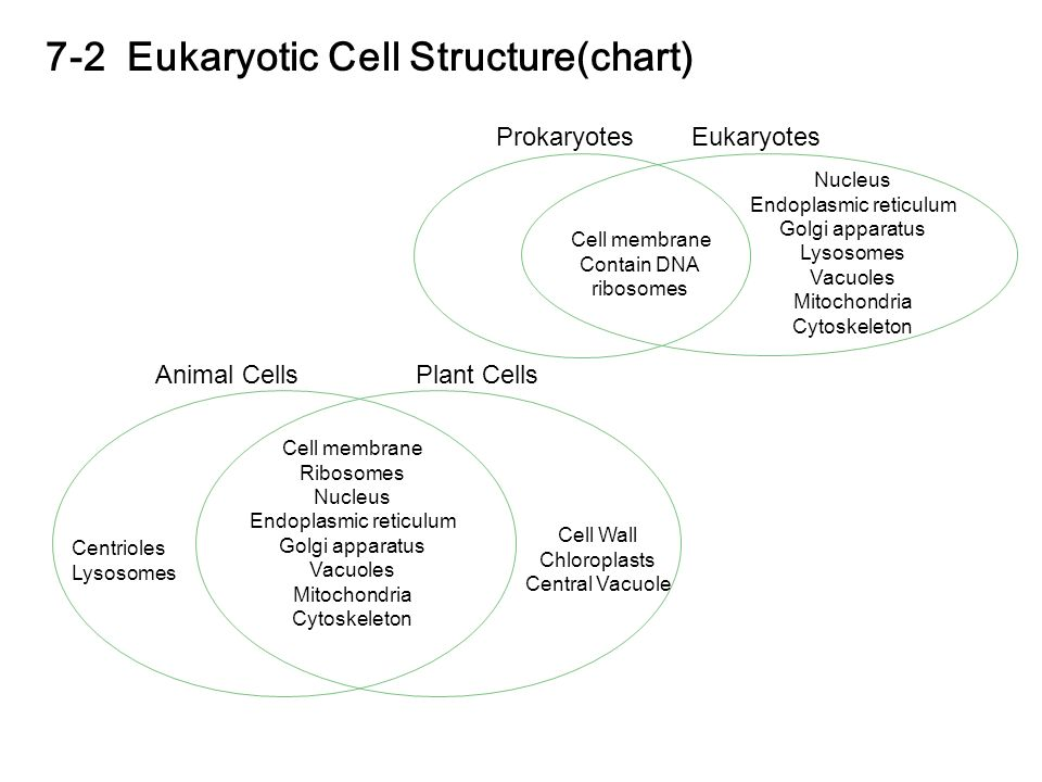 Chapter 7 cell structure and function ppt video online download 7 2 eukaryotic cell structurechart ccuart Image collections