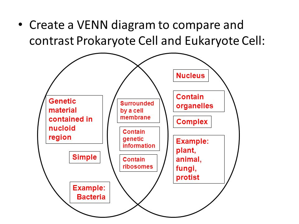 Simple Prokaryotic Versus Eukaryotic Cells Venn Diagram Electrical