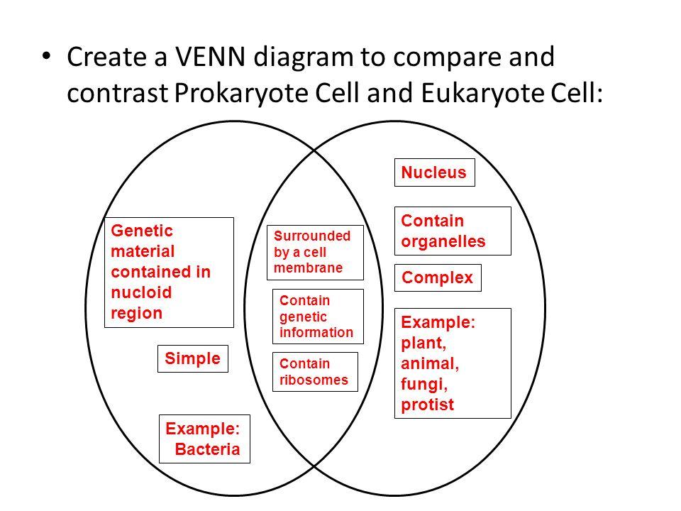 Protist Bacteria Virus Venn Diagram Trusted Wiring Diagram