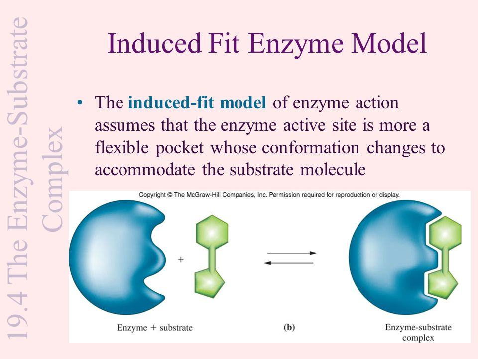 Induced fit model diagrams mcgraw hill trusted wiring diagram 19 1 nomenclature and classification ppt download rh slideplayer com the lock and key model or induced fit model of enzymatic activity fructose lock key ccuart Image collections