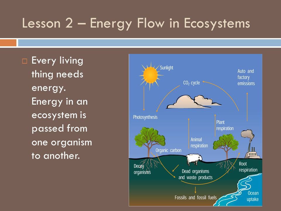 Lesson 2 – Energy Flow in Ecosystems