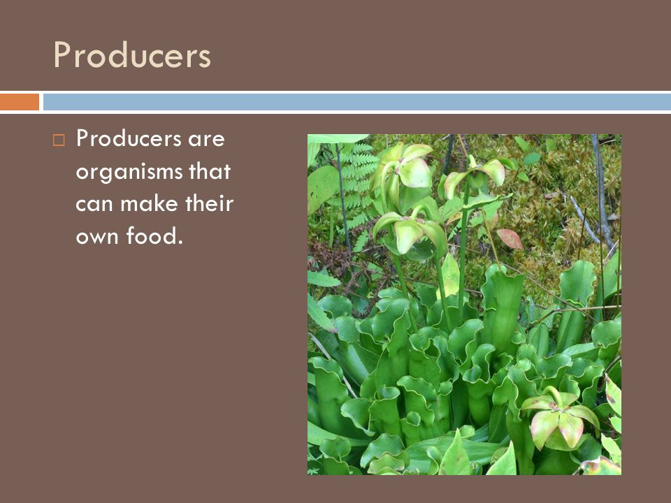 Producers Producers are organisms that can make their own food.