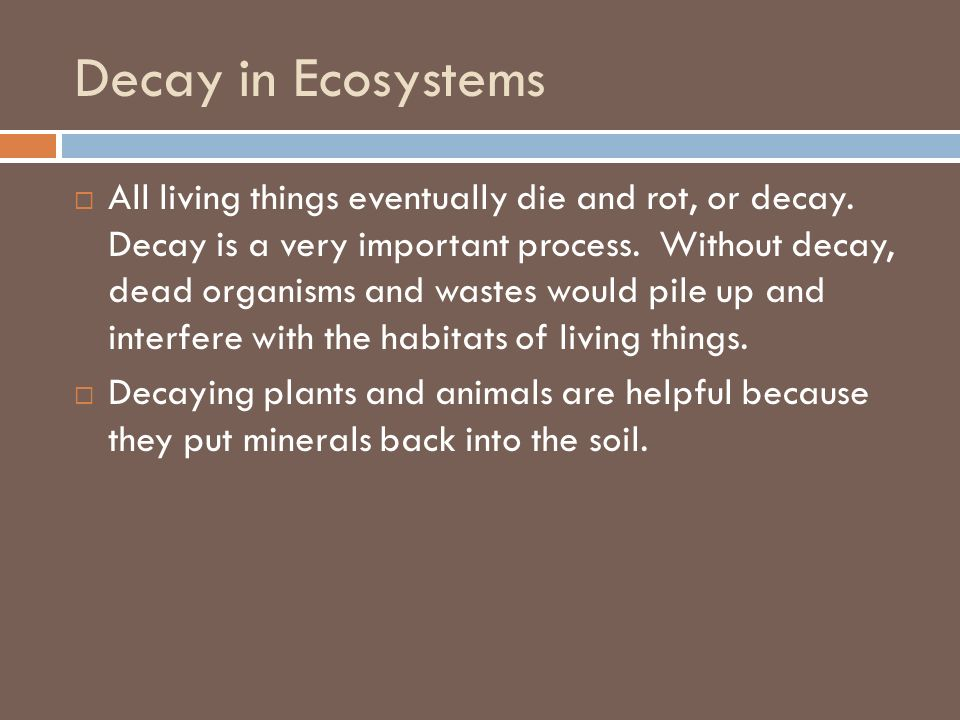 Decay in Ecosystems