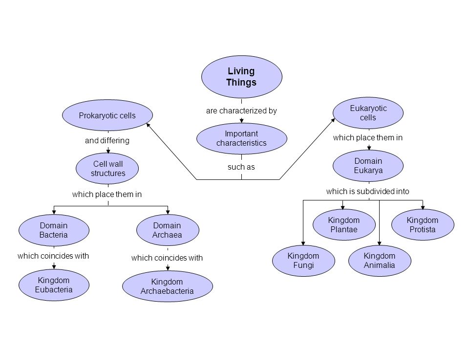 Review the Characteristics of Living Things   ppt video online