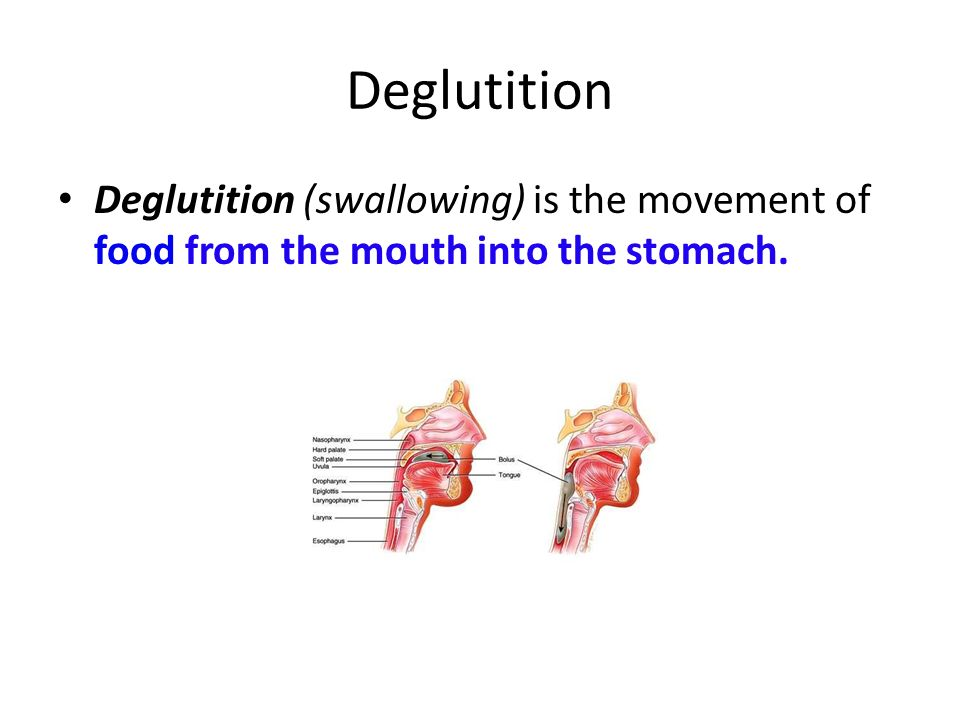 Deglutition Deglutition (swallowing) is the movement of food from the mouth into the stomach.